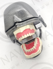 NEO OSCE / ADC Manikin Dental Phantom Head