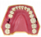 Dental Typodont Jaw - Navadha ZX
